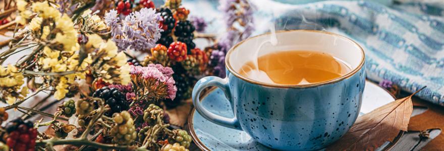 les marques de thé les plus fiables